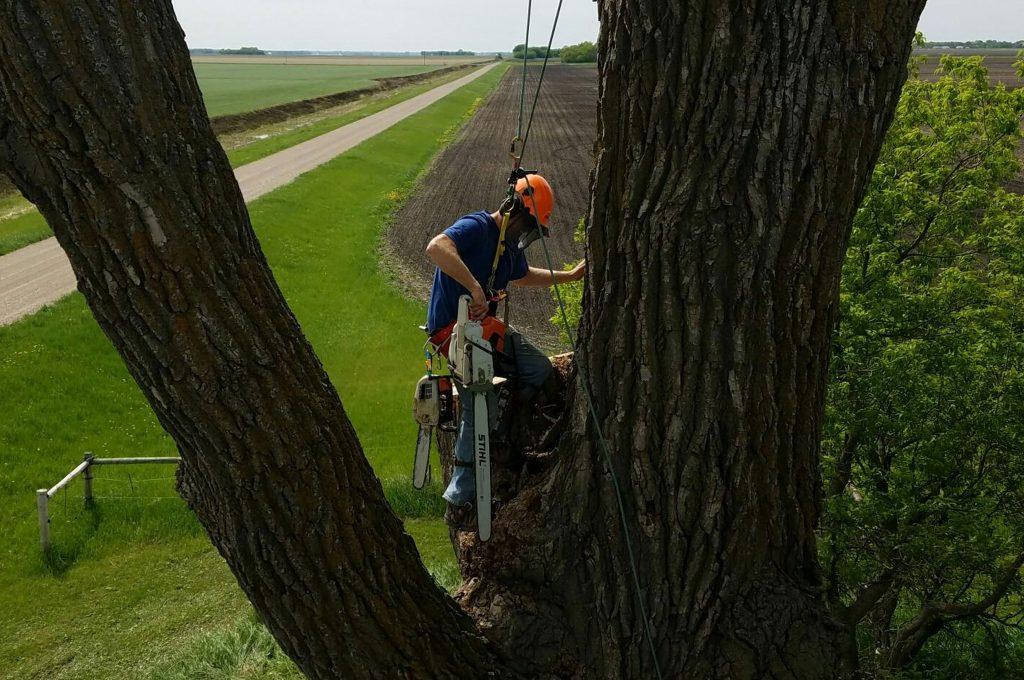 IMG-TreeClimbing